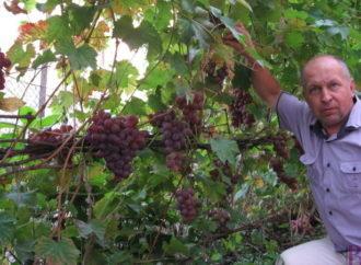 У нашому місті створять Клуб виноградарів Винник