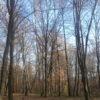 Осінь у винниківській діброві (Фото)
